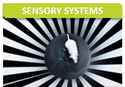 Behavior_Titre_Sensory organs