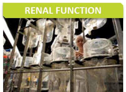 Metabo_Titre_Renal function