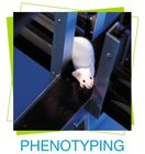 services-phenotyping.jpg