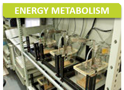 Metabo_Titre_Energy metabolism